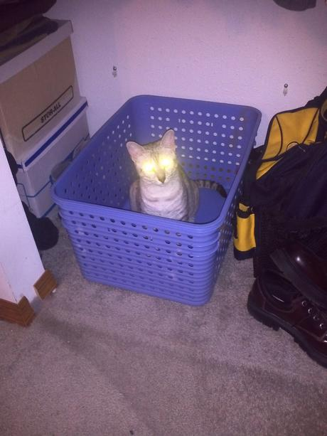 Laundry Cat Watches You Sleep
