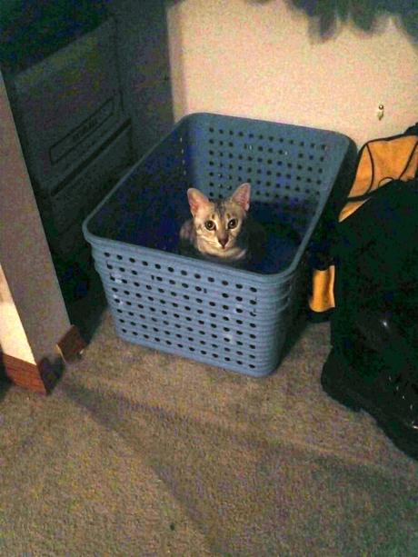 Laundry Cat Waits For More Clothes